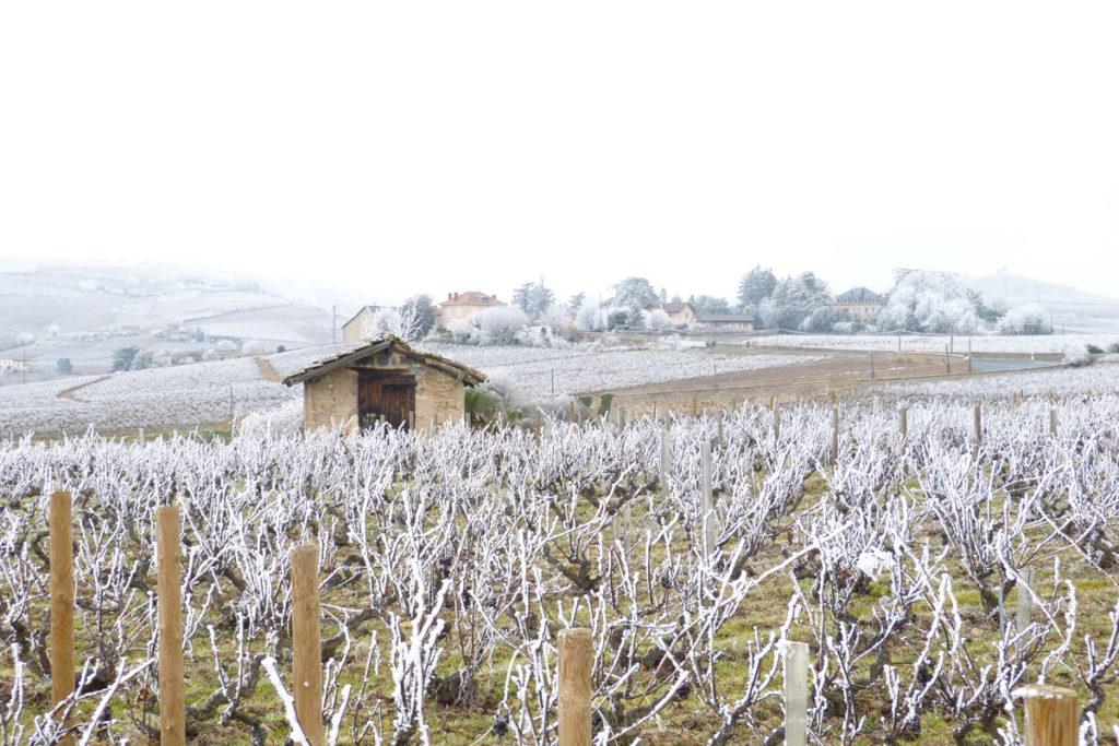 Domaine-des-Marrans-_-vigne-au-vin-hiver-02