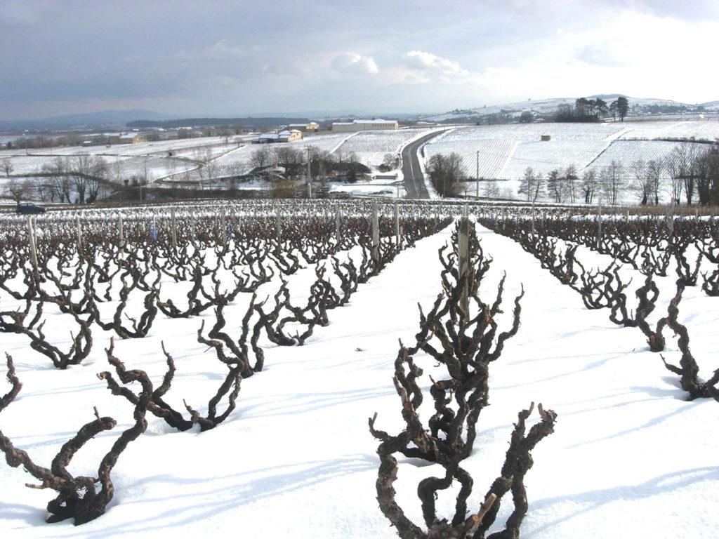 Domaine-des-Marrans-_-vigne-au-vin-hiver-03