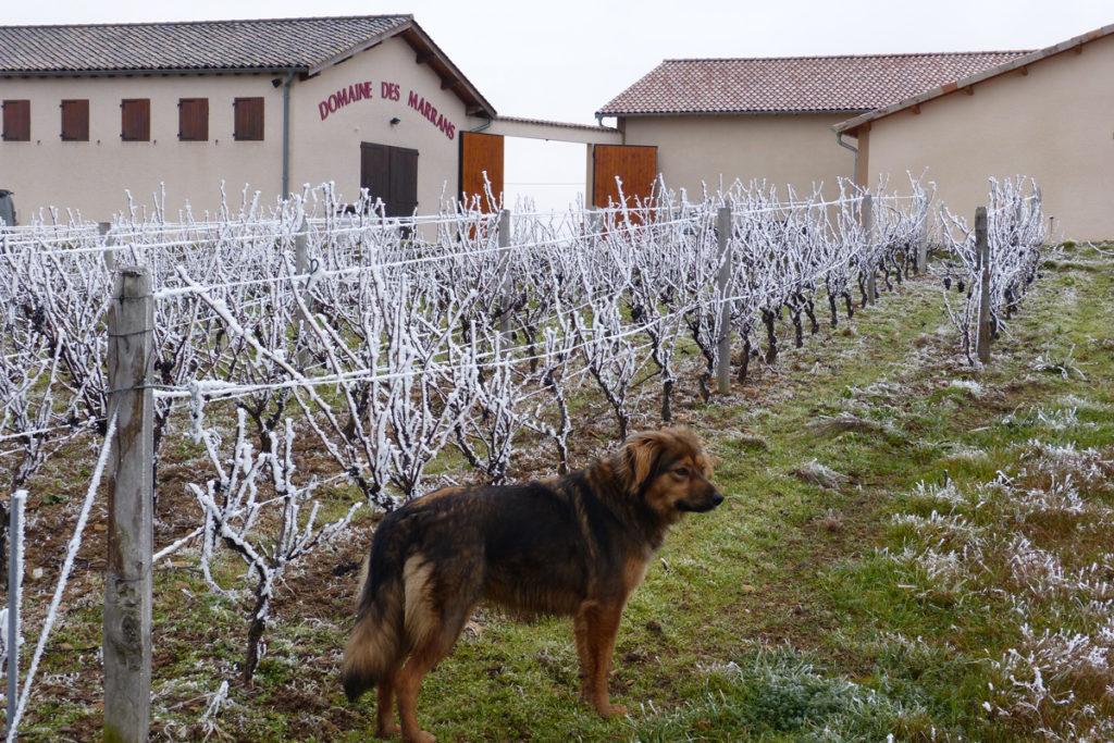 Domaine-des-Marrans-_-vigne-au-vin-hiver-04